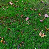 Autumn Grass with Fallen Leaves