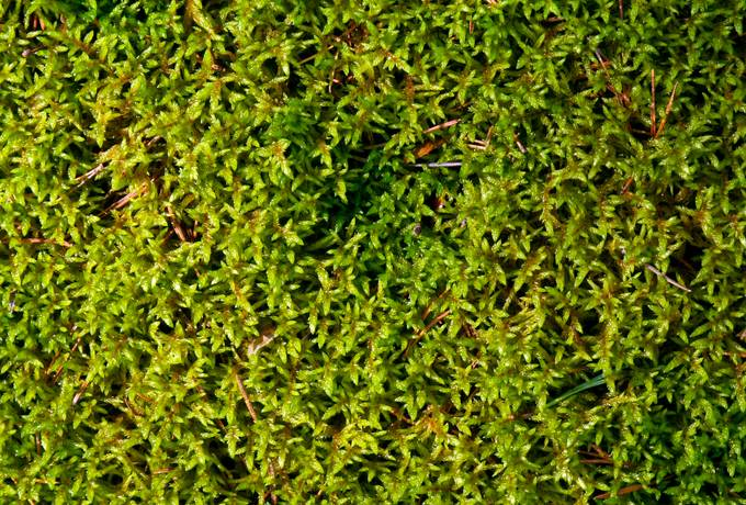 closeup moss ground