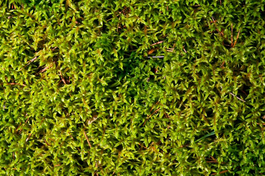 closeup moss ground free texture