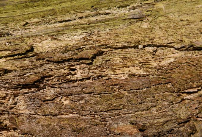 free nature rotten wood texture