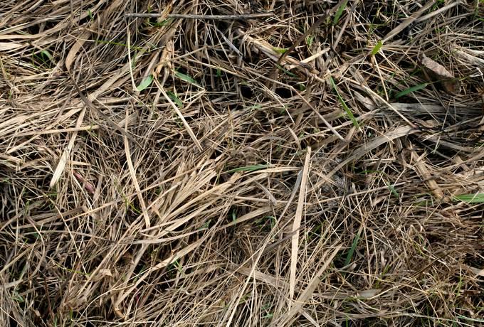 hay grass dry
