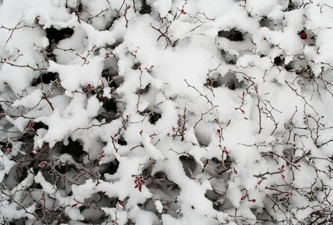 free snow bush nature texture