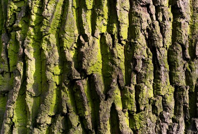 free algae rough bark texture