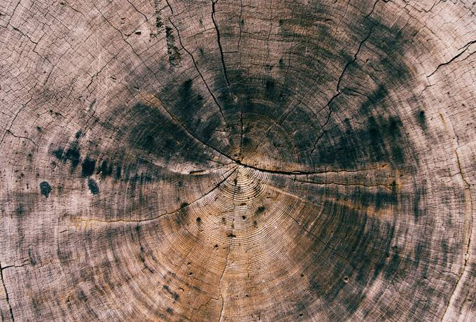free Tree Stump, Crack Wood texture