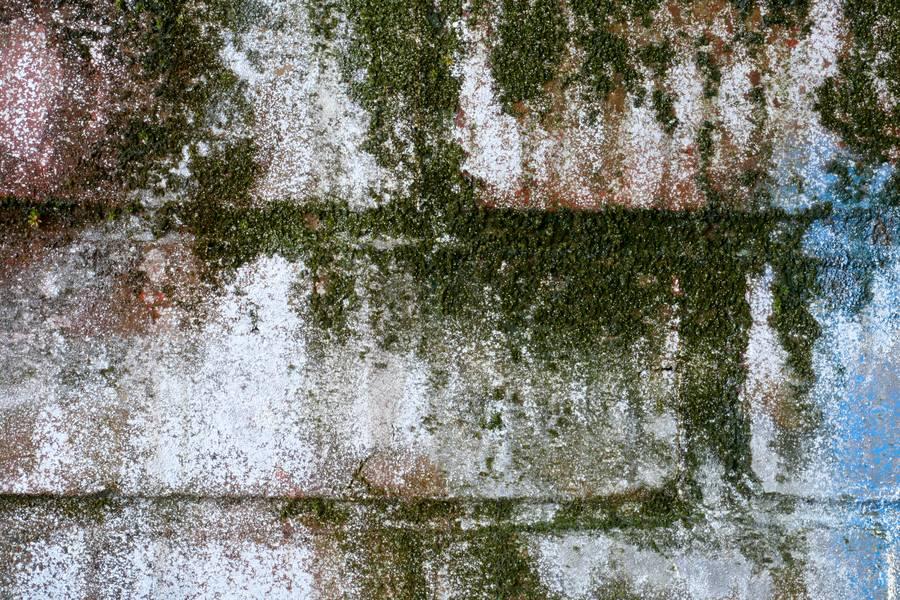 algae wall brick free texture