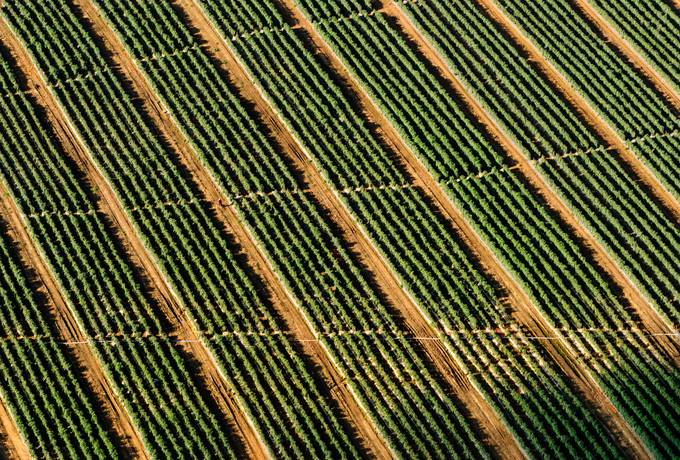 free Vineyard from Above, Drone Photo texture