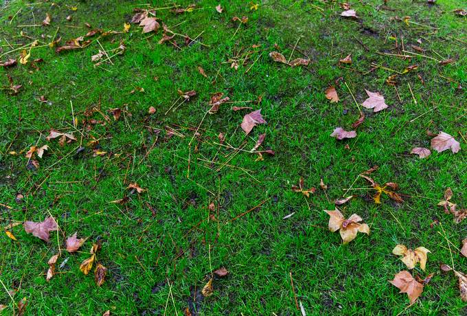 free Autumn Grass with Fallen Leaves texture