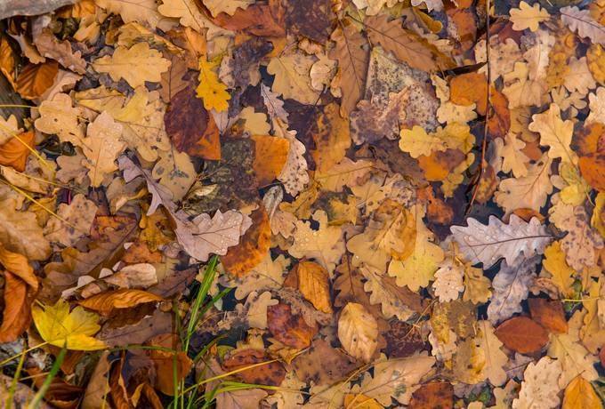 free autumn leaves fall texture