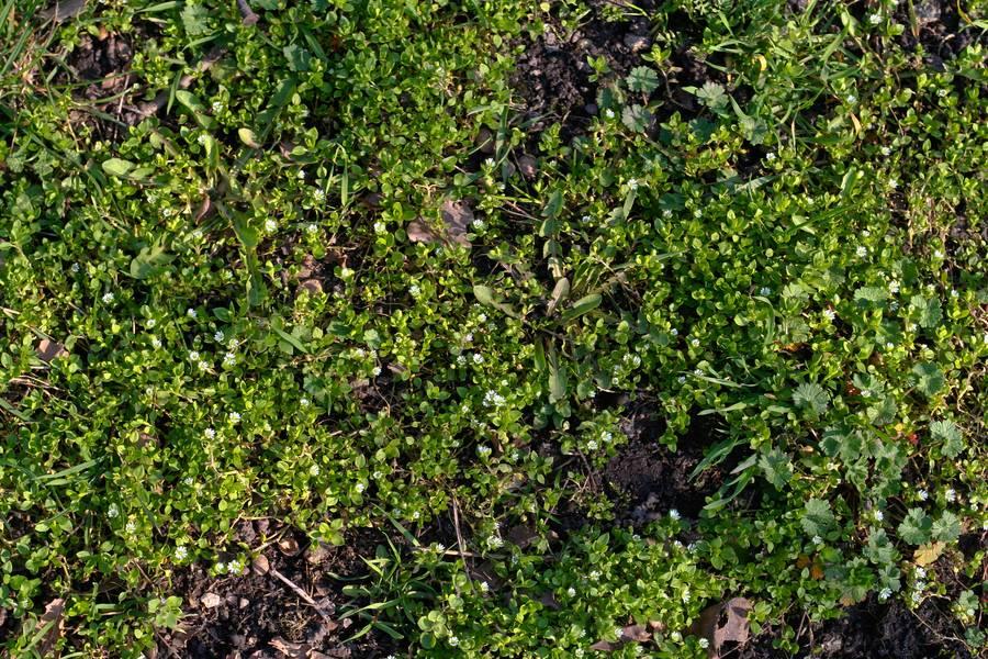 plant ground nature free texture