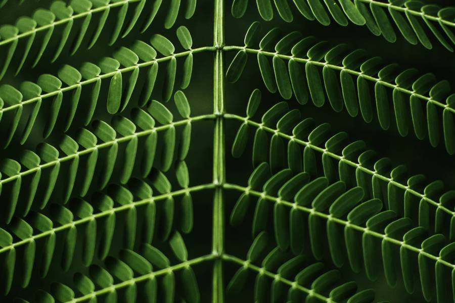 Green Leaf Symmetry free texture