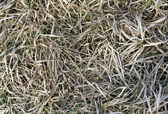 free hay nature ground texture