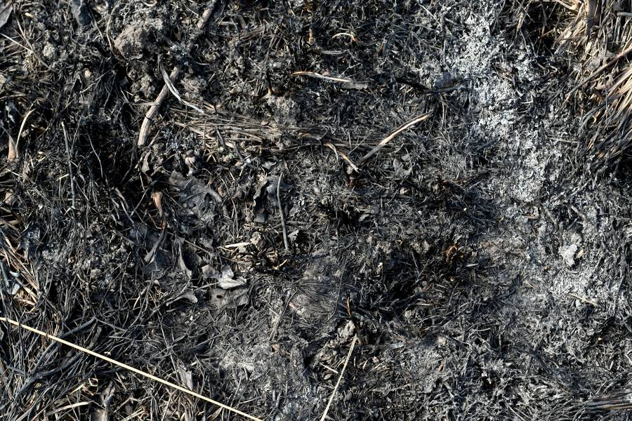 ash burnt ground free texture