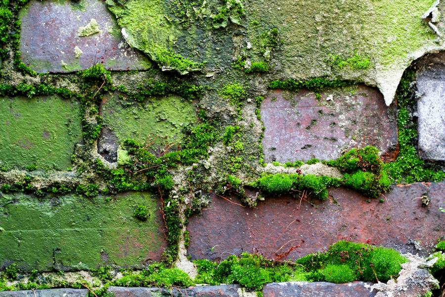 nature wall brick free texture