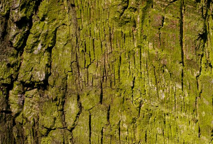green bark nature