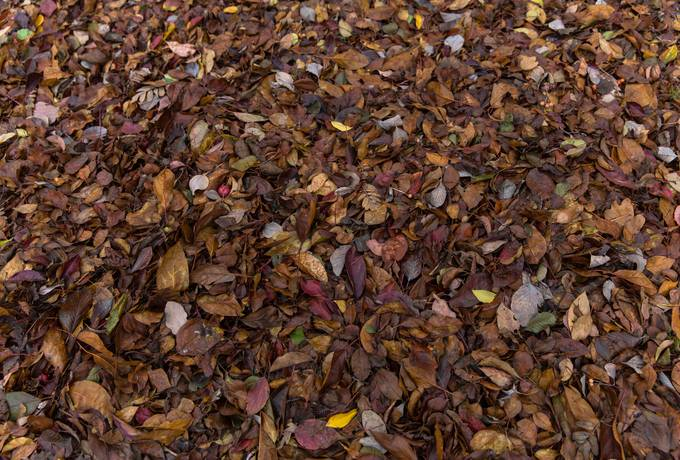 autumn leaves lawn