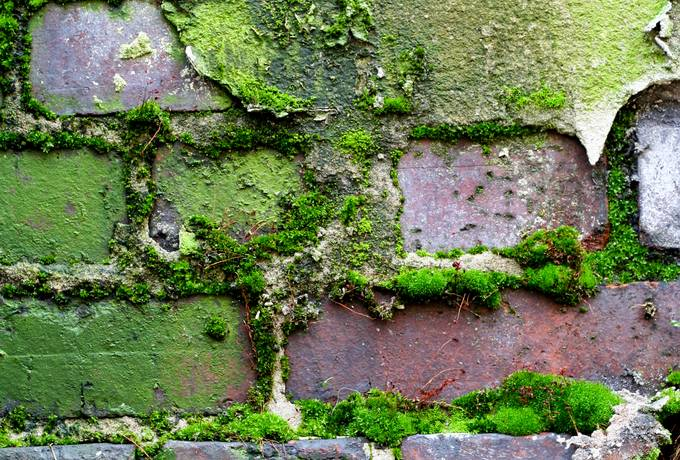 nature wall brick
