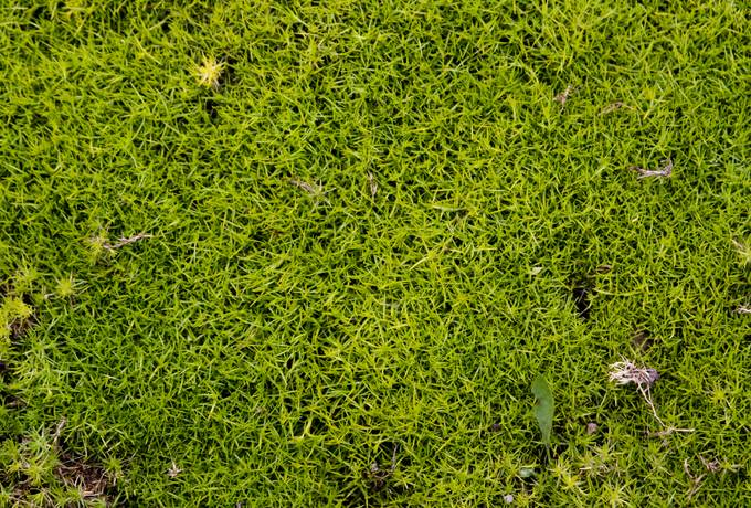 free nature green moss texture