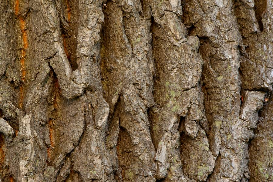 bark wood plant free texture