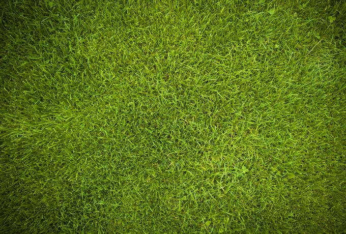 free Green Grass Background texture