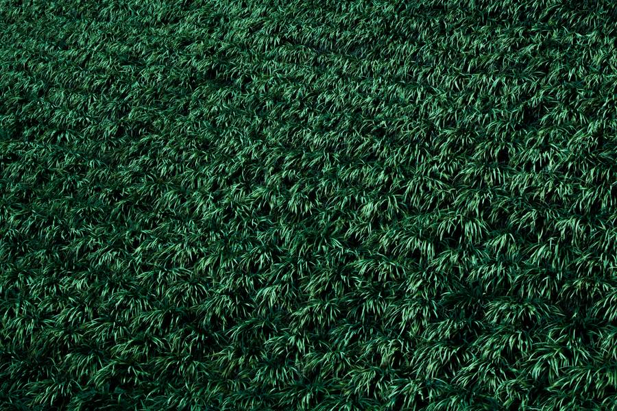 Green Grass Background free texture