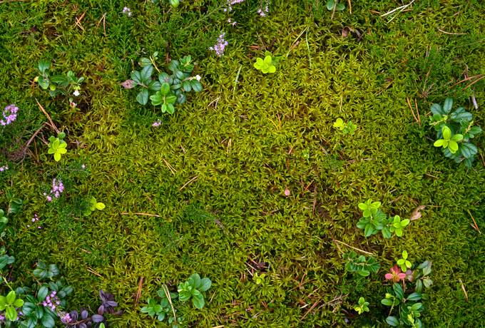 free ground plant moss texture