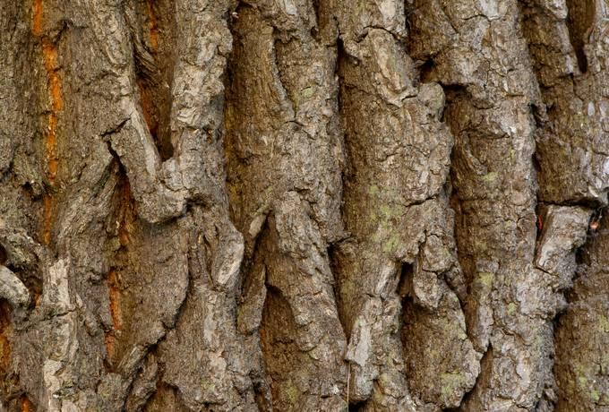 bark wood plant