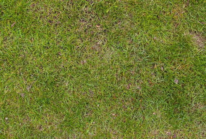 free grass nature background texture