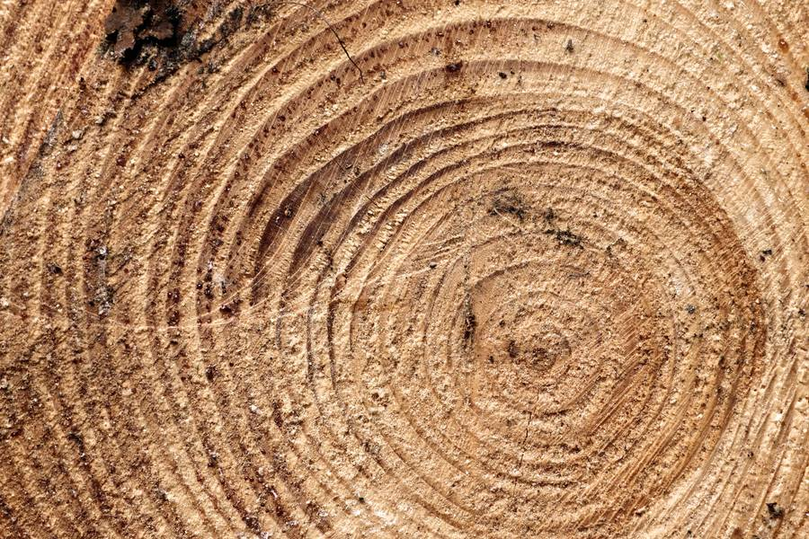 Piece of Wood Cross Section free texture