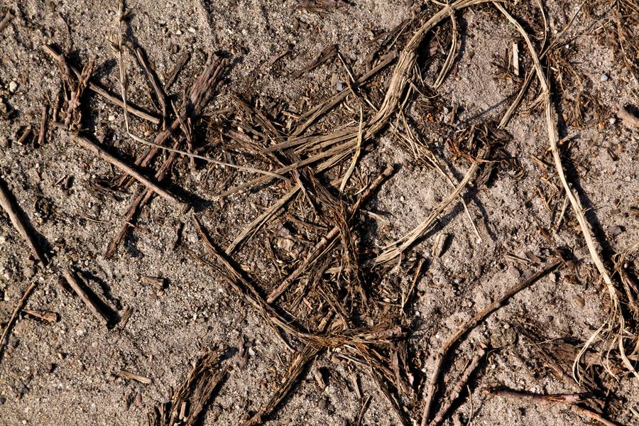 sand ground soil free texture