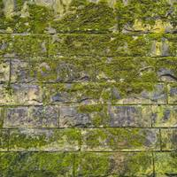 Green Moss on Old Brick Wall