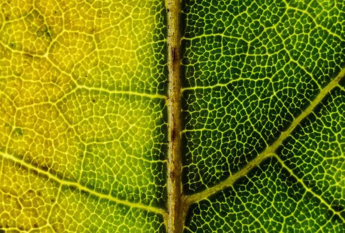 free Green Leaf Macro texture