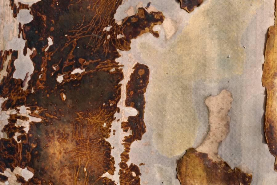 grunge dirty peeling free texture