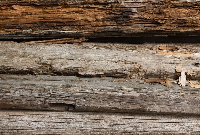 free old rotten plank texture