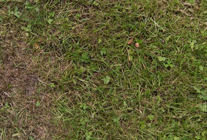 free green grass lawn texture