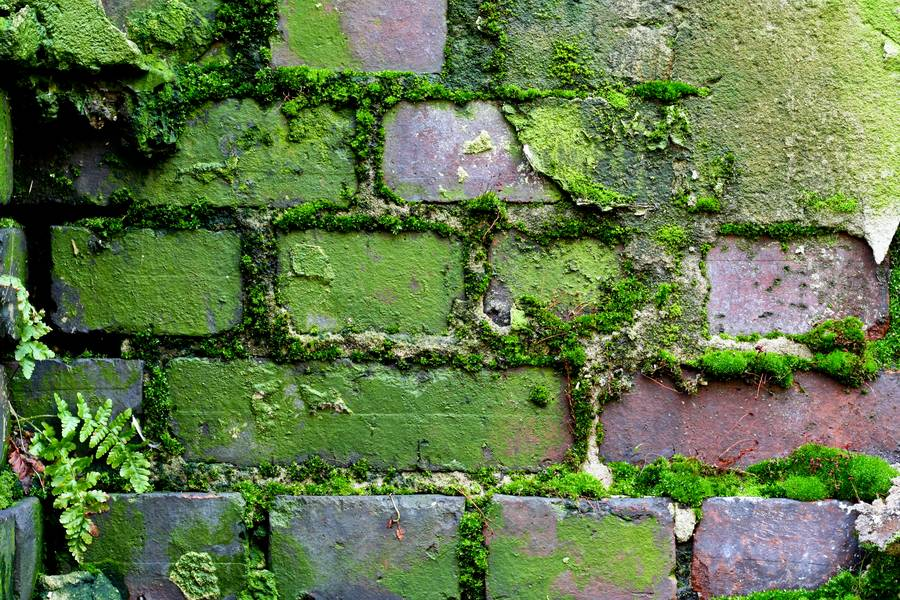 wall moss brick free texture