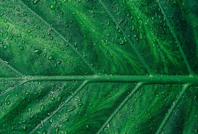 Green Wet Leaf Surface