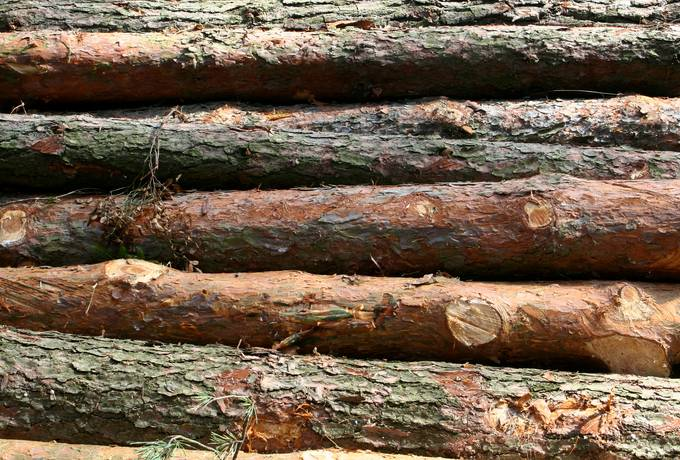 free tree bark woodpile texture