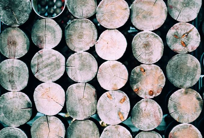 free Dirty Round Wooden Stumps texture