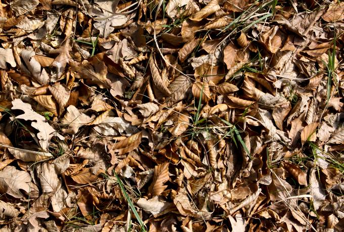 free tree litter autumn ground texture