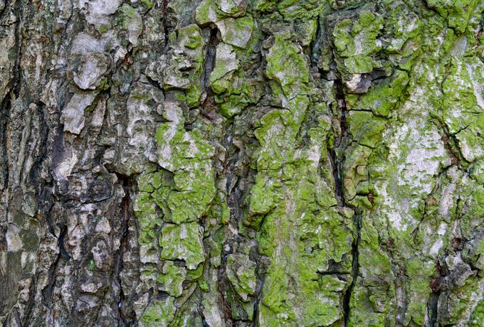 bark nature algae