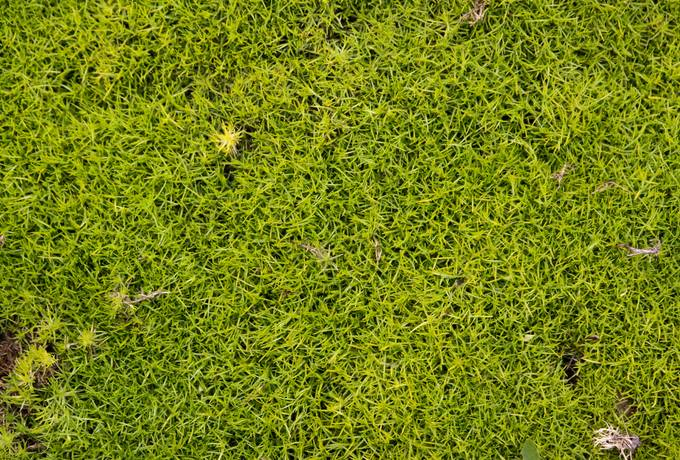 moss nature ground