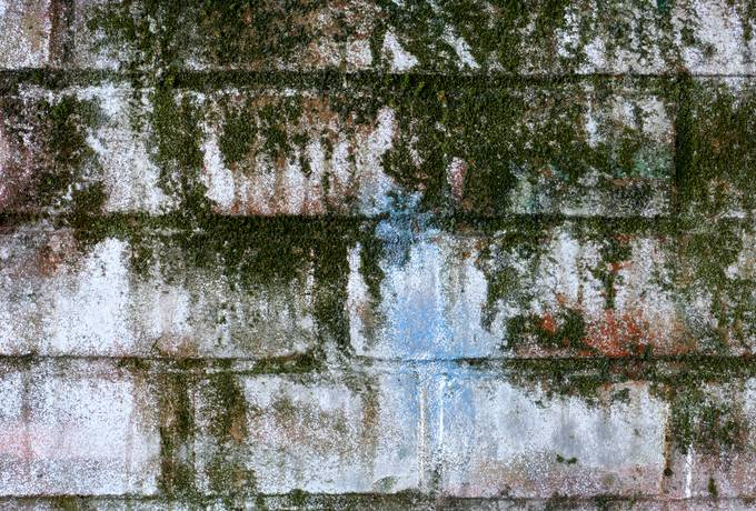 wall algae brick