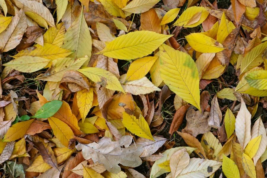park fall autumn free texture