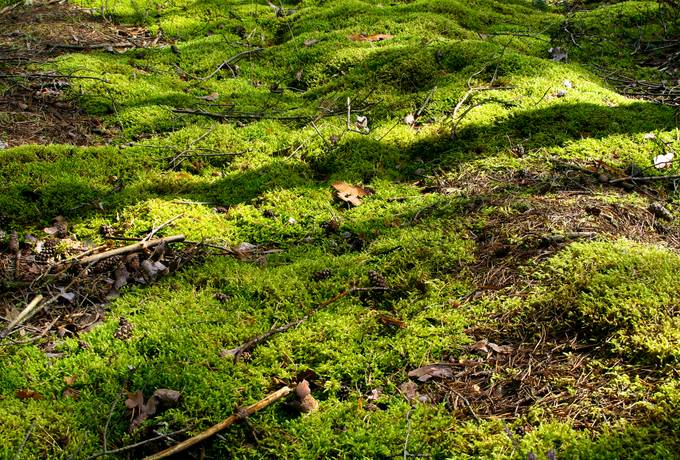 moss nature forest
