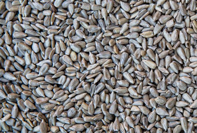 free Sunflower Seeds texture