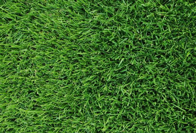 free Green Grass Mowed texture