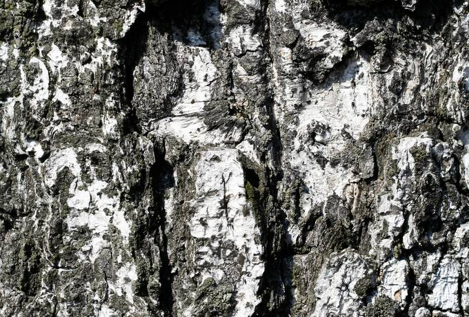 free bark rough wood texture