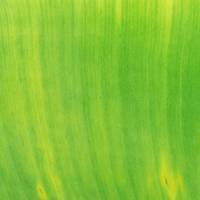 Lime Green Leaf Closeup