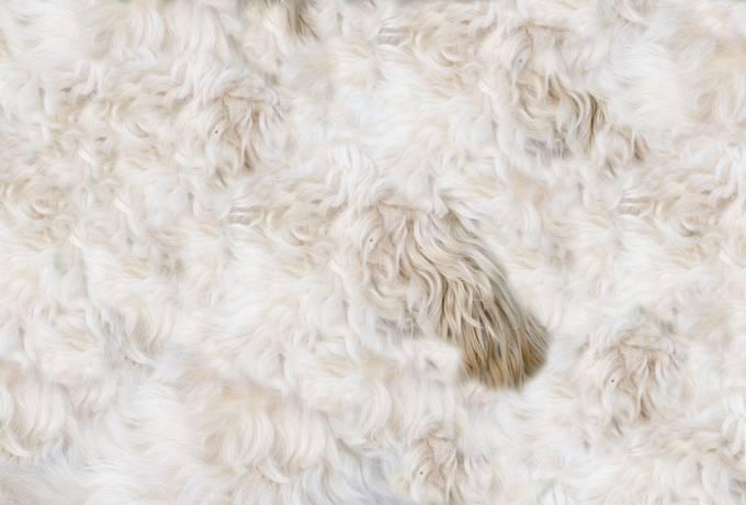 free Beige Shaggy Fur texture