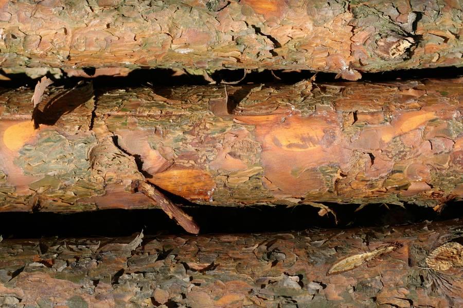 peeling bark tree free texture